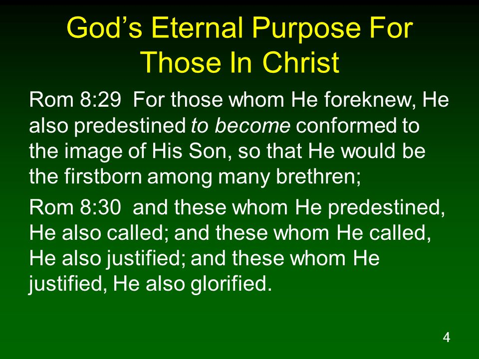 4 Gods Eternal Purpose For Those In Christ Rom 8:29 For those whom He foreknew, He also predestined to become conformed to the image of His Son, so th