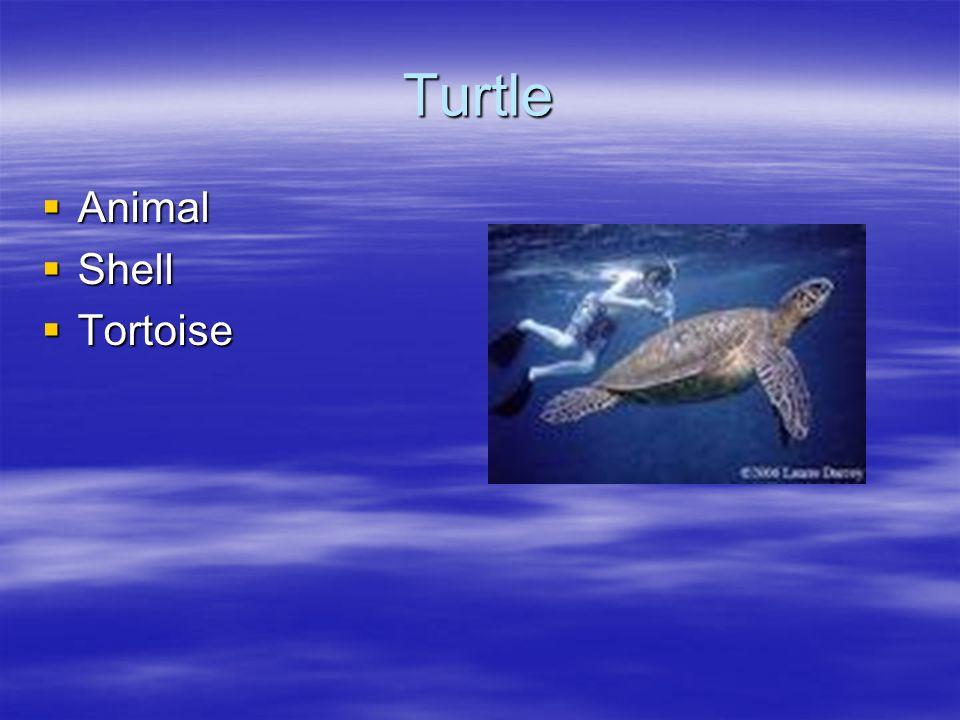 Turtle Animal Animal Shell Shell Tortoise Tortoise