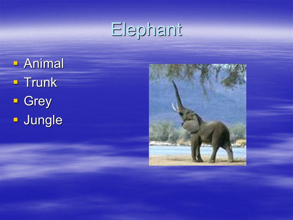 Elephant Animal Animal Trunk Trunk Grey Grey Jungle Jungle