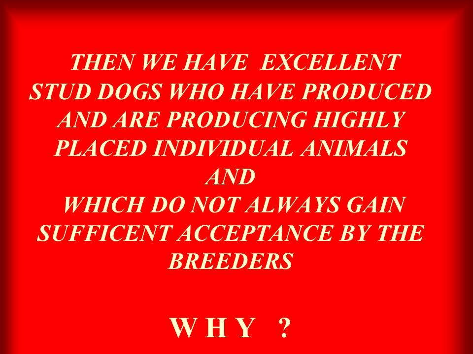 THEN WE HAVE EXCELLENT STUD DOGS WHO HAVE PRODUCED AND ARE PRODUCING HIGHLY PLACED INDIVIDUAL ANIMALS AND WHICH DO NOT ALWAYS GAIN SUFFICENT ACCEPTANC
