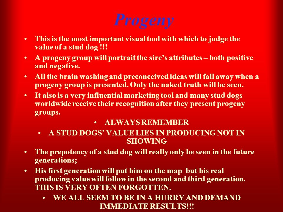 Progeny This is the most important visual tool with which to judge the value of a stud dog !!! A progeny group will portrait the sires attributes – bo