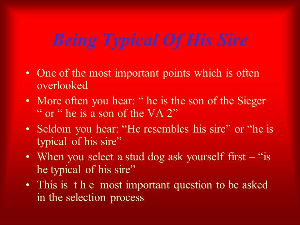Being Typical Of His Sire One of the most important points which is often overlooked More often you hear: he is the son of the Sieger or he is a son o