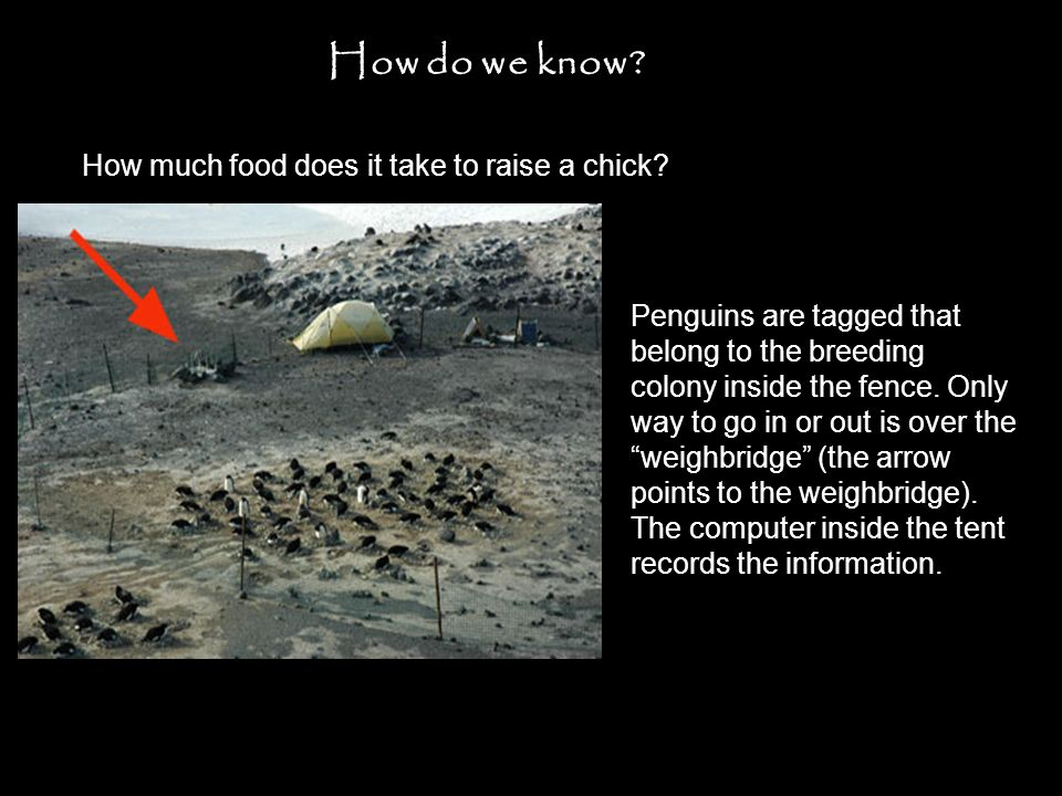 How much food does it take to raise a chick. How do we know.