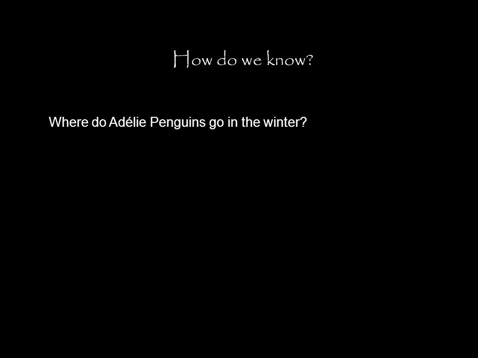 How do we know? Where do Adélie Penguins go in the winter?