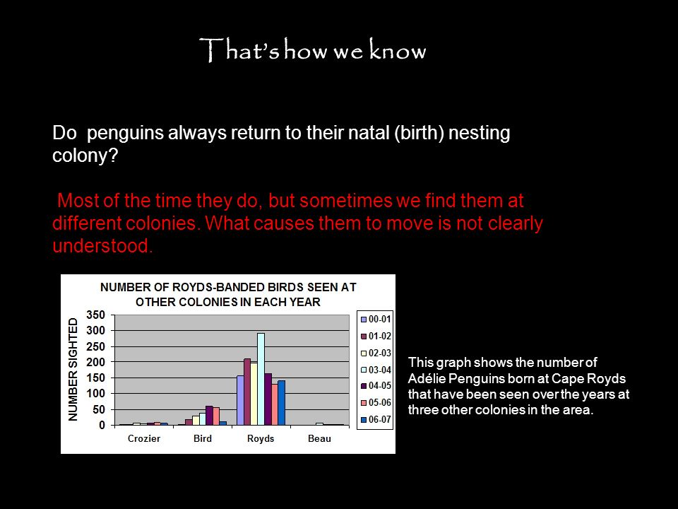 Thats how we know Do penguins always return to their natal (birth) nesting colony? Most of the time they do, but sometimes we find them at different c