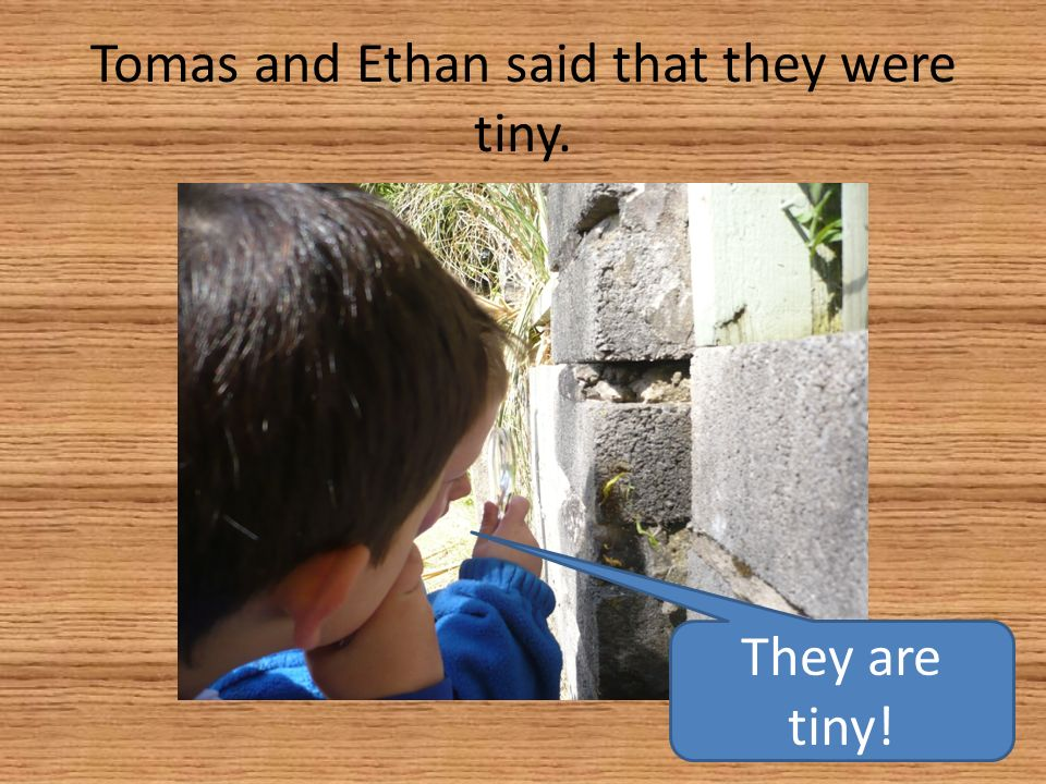 Tomas and Ethan said that they were tiny. They are tiny!
