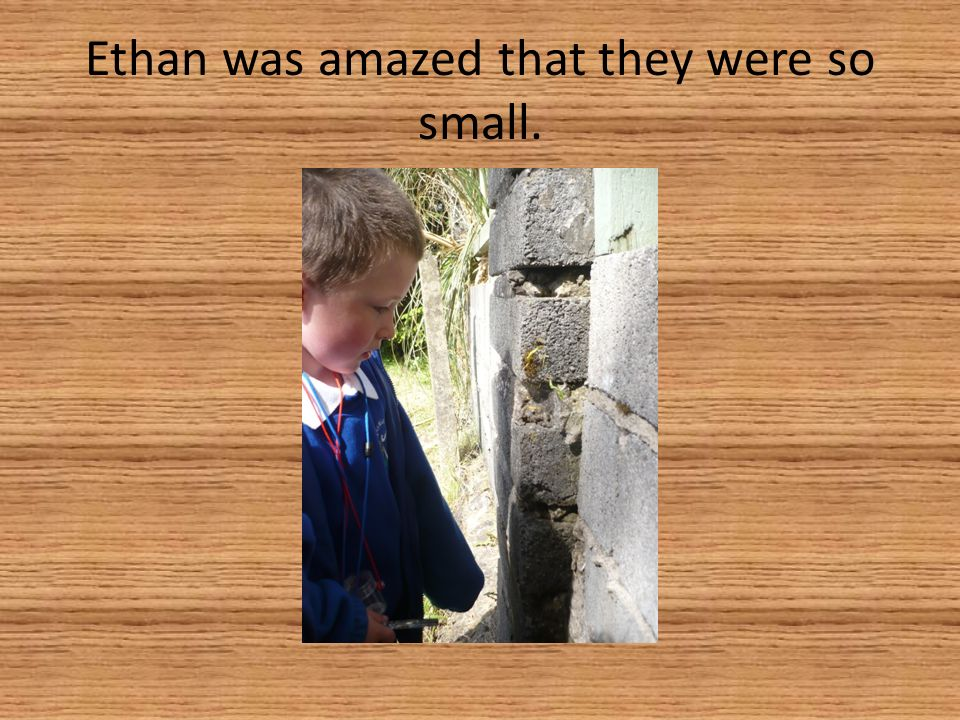 Ethan was amazed that they were so small.