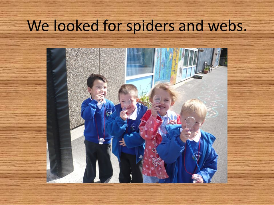 We looked for spiders and webs.