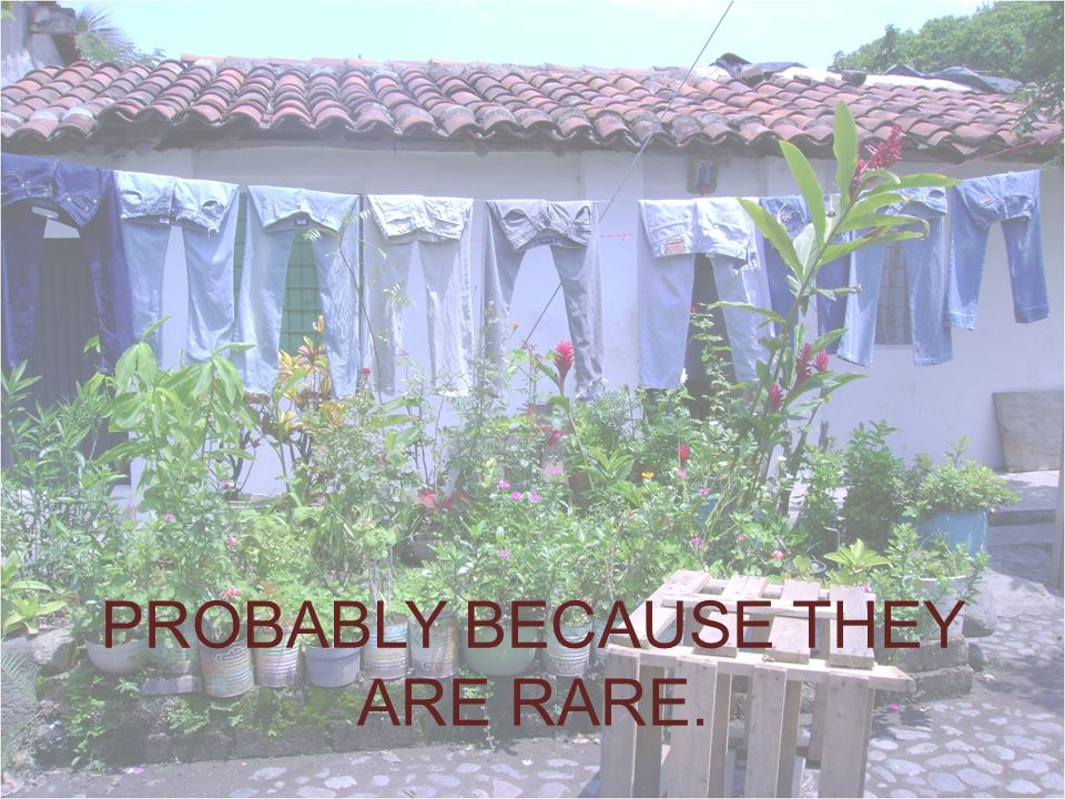 PROBABLY BECAUSE THEY ARE RARE.