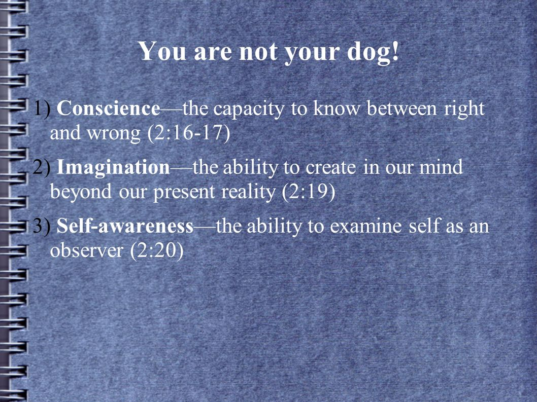 You are not your dog! 1) Consciencethe capacity to know between right and wrong (2:16-17) 2) Imaginationthe ability to create in our mind beyond our p