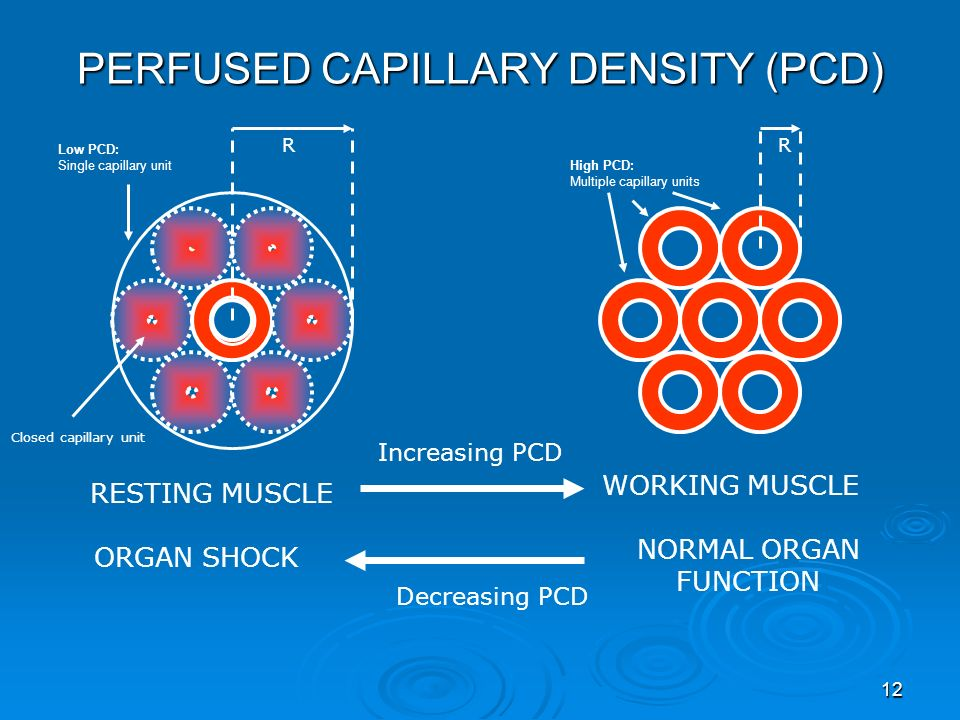 12 High PCD: Multiple capillary units Low PCD: Single capillary unit RESTING MUSCLE WORKING MUSCLE Increasing PCD Closed capillary unit RR Decreasing