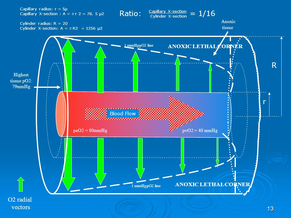 13 O2 radial vectors 1 mmHg pO2 line ANOXIC LETHAL CORNER paO2 = 80mmHgpvO2 = 40 mmHg Highest tissue pO2: 79mmHg Anoxic tissue Capillary radius: r = 5