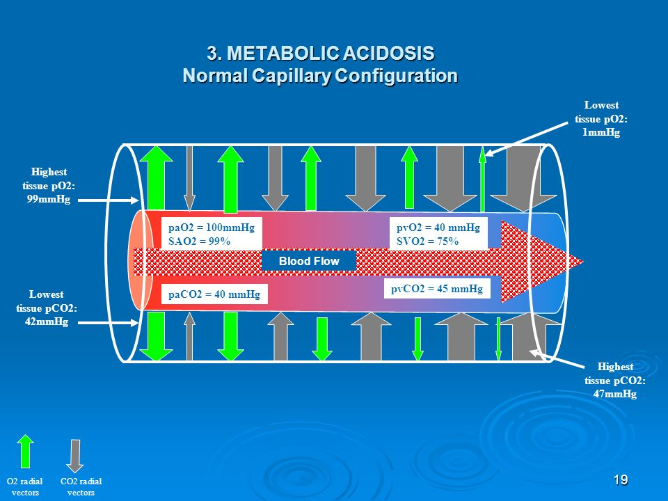 19 O2 radial vectors CO2 radial vectors paO2 = 100mmHg SAO2 = 99% pvO2 = 40 mmHg SVO2 = 75% paCO2 = 40 mmHg pvCO2 = 45 mmHg Highest tissue pO2: 99mmHg