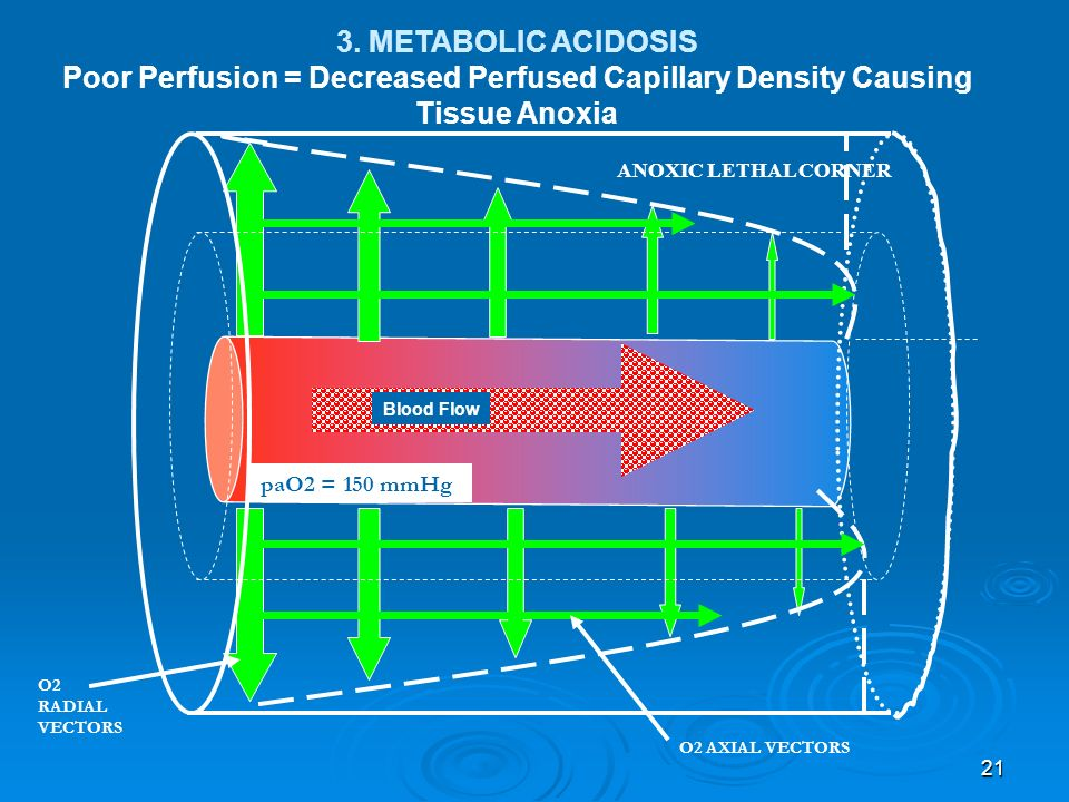 21 ANOXIC LETHAL CORNER Blood Flow 3. METABOLIC ACIDOSIS Poor Perfusion = Decreased Perfused Capillary Density Causing Tissue Anoxia paO2 = 150 mmHg O