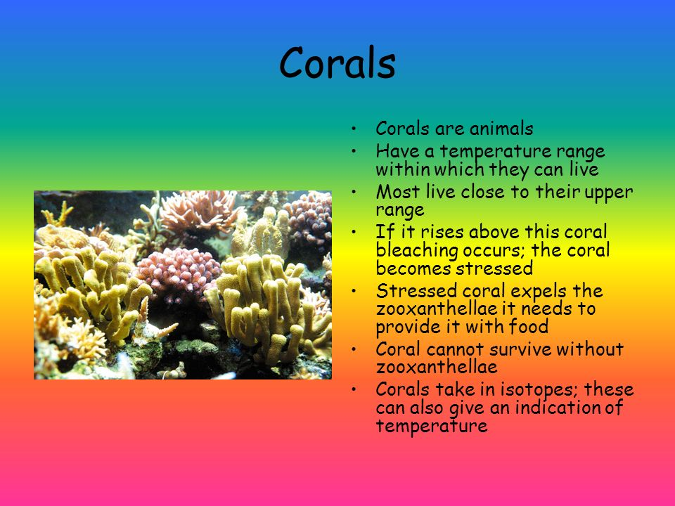 Corals Corals are animals Have a temperature range within which they can live Most live close to their upper range If it rises above this coral bleach