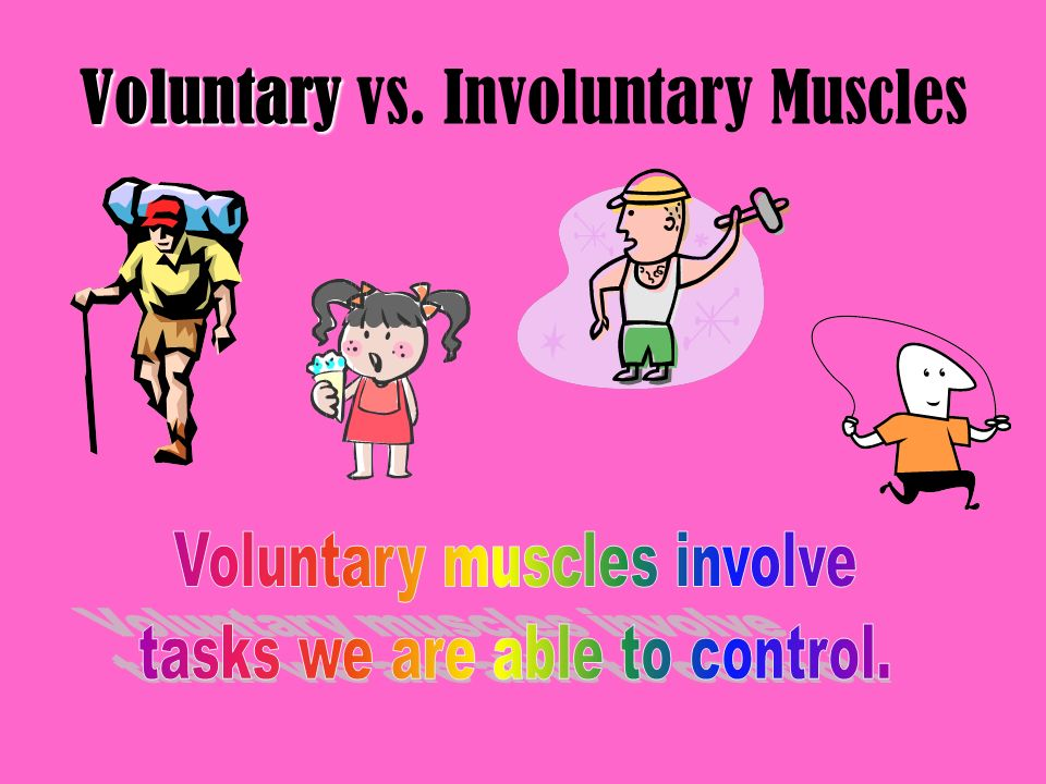 Voluntary Voluntary vs. Involuntary Muscles