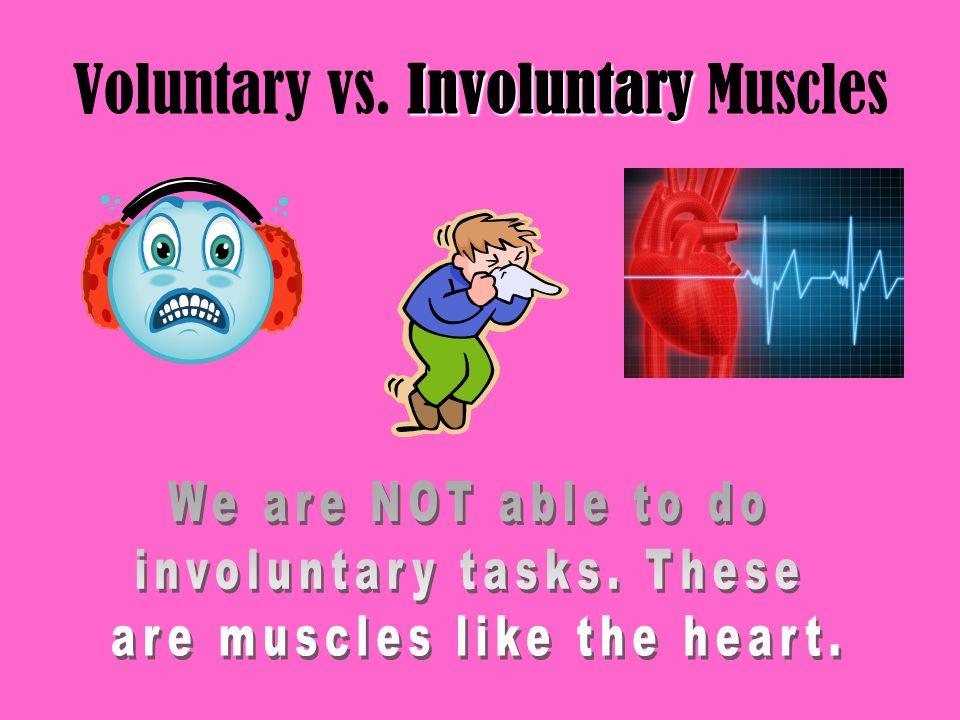 Involuntary Voluntary vs. Involuntary Muscles