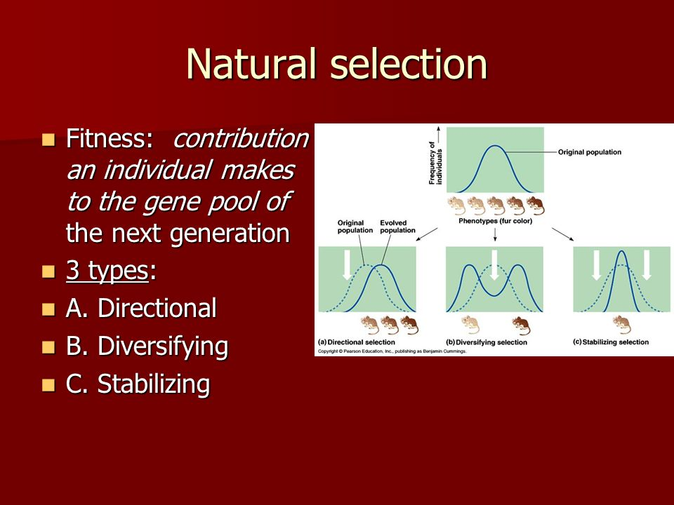 Natural selection Fitness: contribution an individual makes to the gene pool of the next generation Fitness: contribution an individual makes to the g