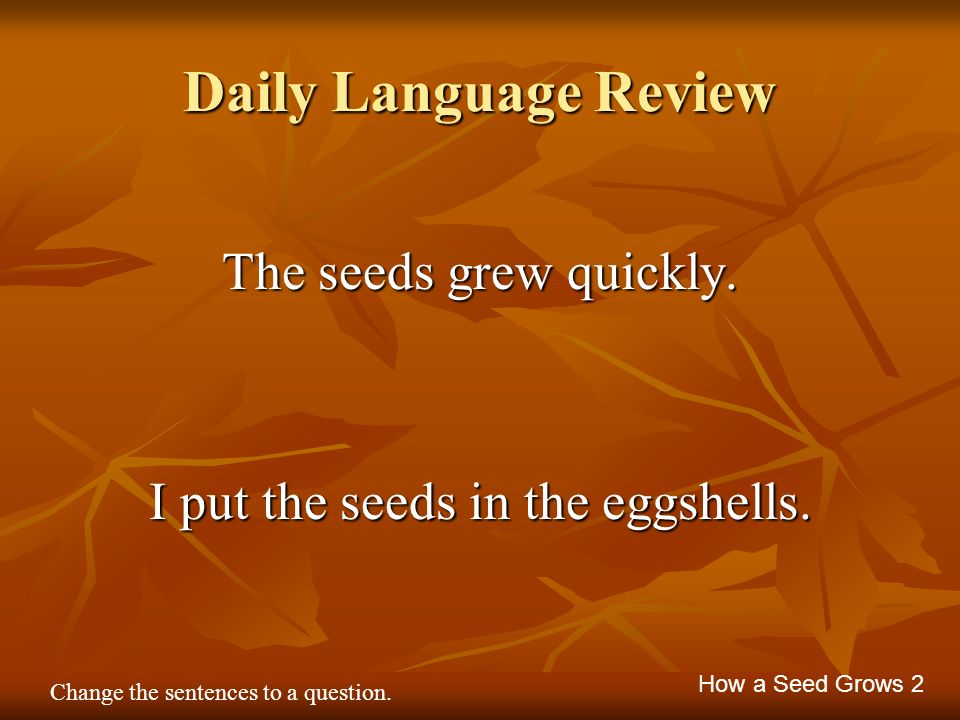 Daily Language Review The seeds grew quickly. I put the seeds in the eggshells. How a Seed Grows 2 Change the sentences to a question.