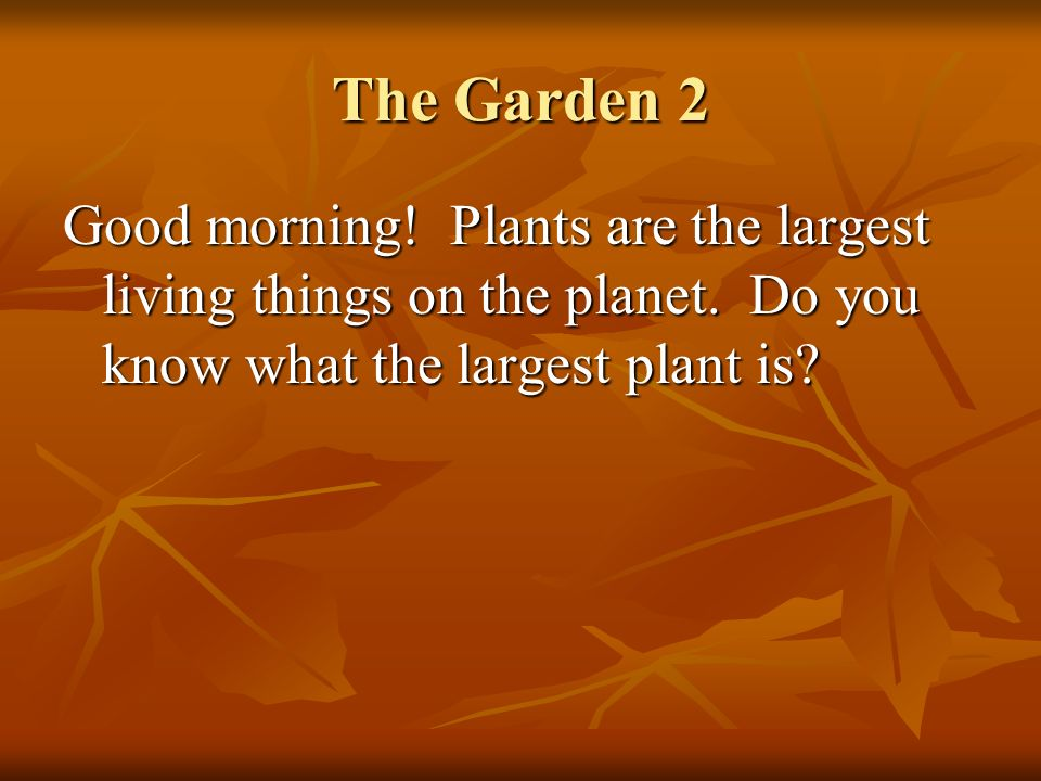 The Garden 2 Good morning! Plants are the largest living things on the planet. Do you know what the largest plant is?