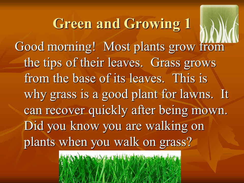Green and Growing 1 Good morning! Most plants grow from the tips of their leaves. Grass grows from the base of its leaves. This is why grass is a good