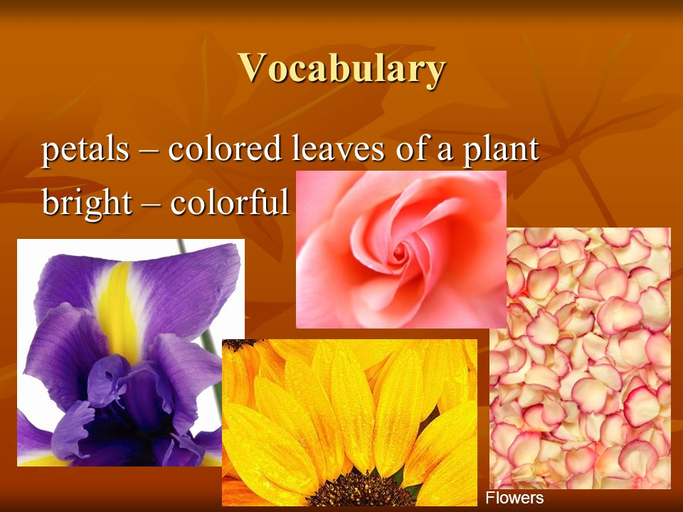 Vocabulary petals – colored leaves of a plant bright – colorful Flowers