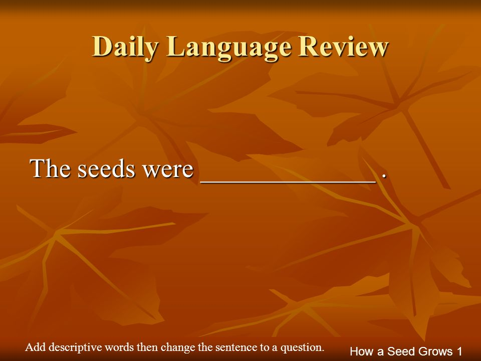 Daily Language Review The seeds were _____________. How a Seed Grows 1 Add descriptive words then change the sentence to a question.