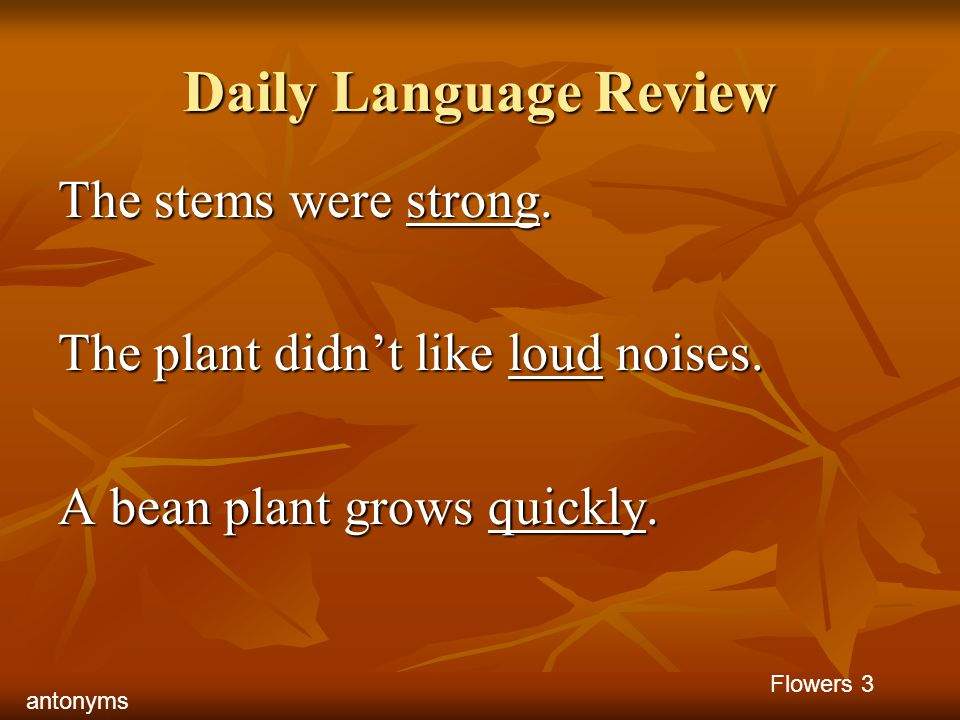 Daily Language Review The stems were strong. The plant didnt like loud noises. A bean plant grows quickly. Flowers 3 antonyms