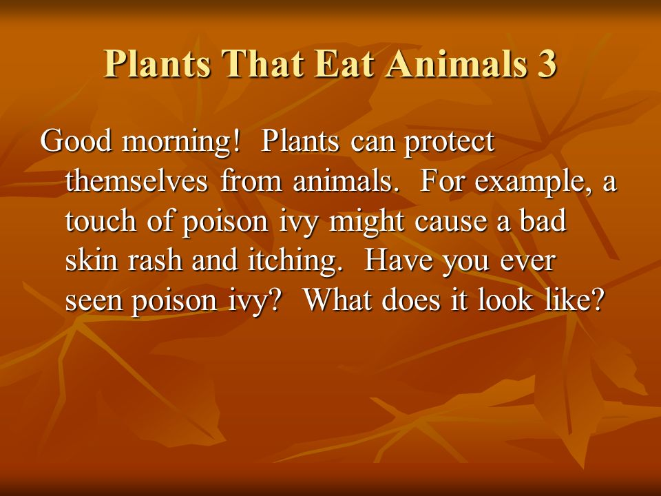 Plants That Eat Animals 3 Good morning! Plants can protect themselves from animals. For example, a touch of poison ivy might cause a bad skin rash and