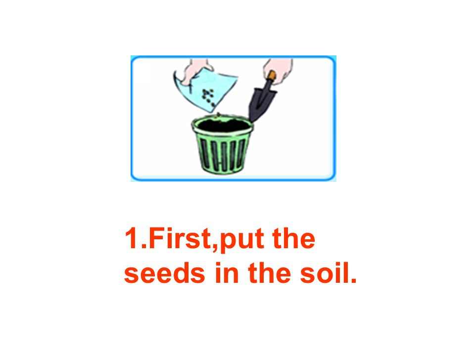 1.First,put the seeds in the soil.