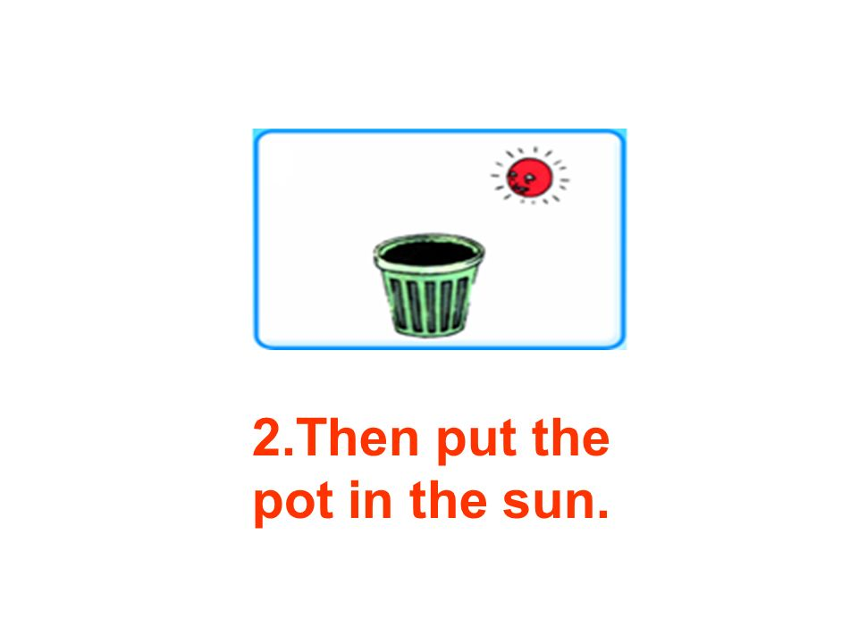 2.Then put the pot in the sun.