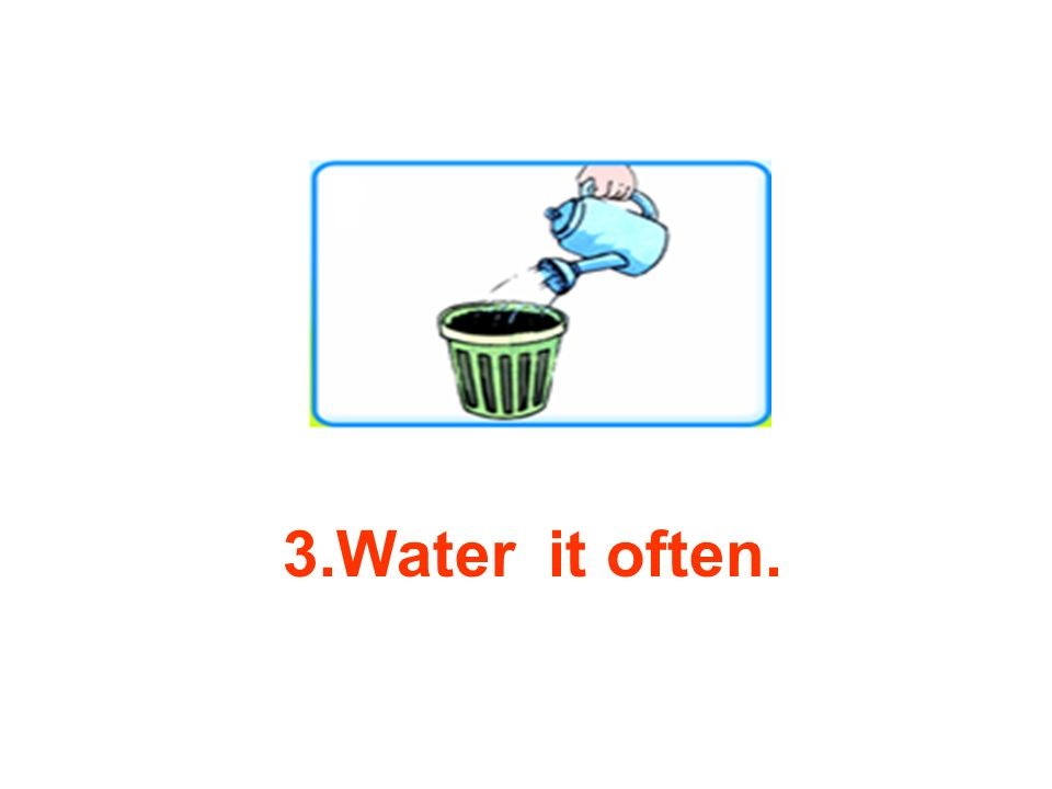 3.Water it often.