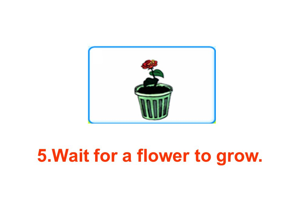 5.Wait for a flower to grow.
