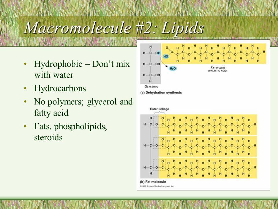 Macromolecule #4: Nucleic Acids: Informational Macromolecules Nucleic Acids are polymers of nucleotides (polynucleotide) A nucleotide has 3 parts: nitrogenous base pentose sugar phosphate group