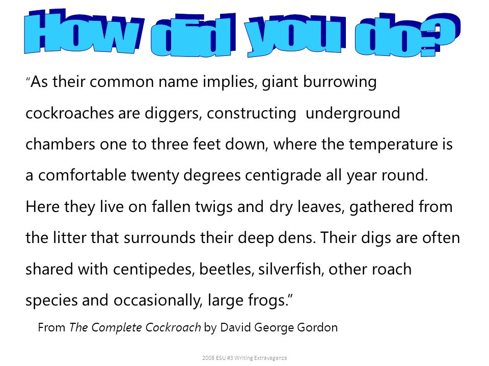 As their common name implies, giant burrowing cockroaches are diggers, constructing underground chambers one to three feet down, where the temperature