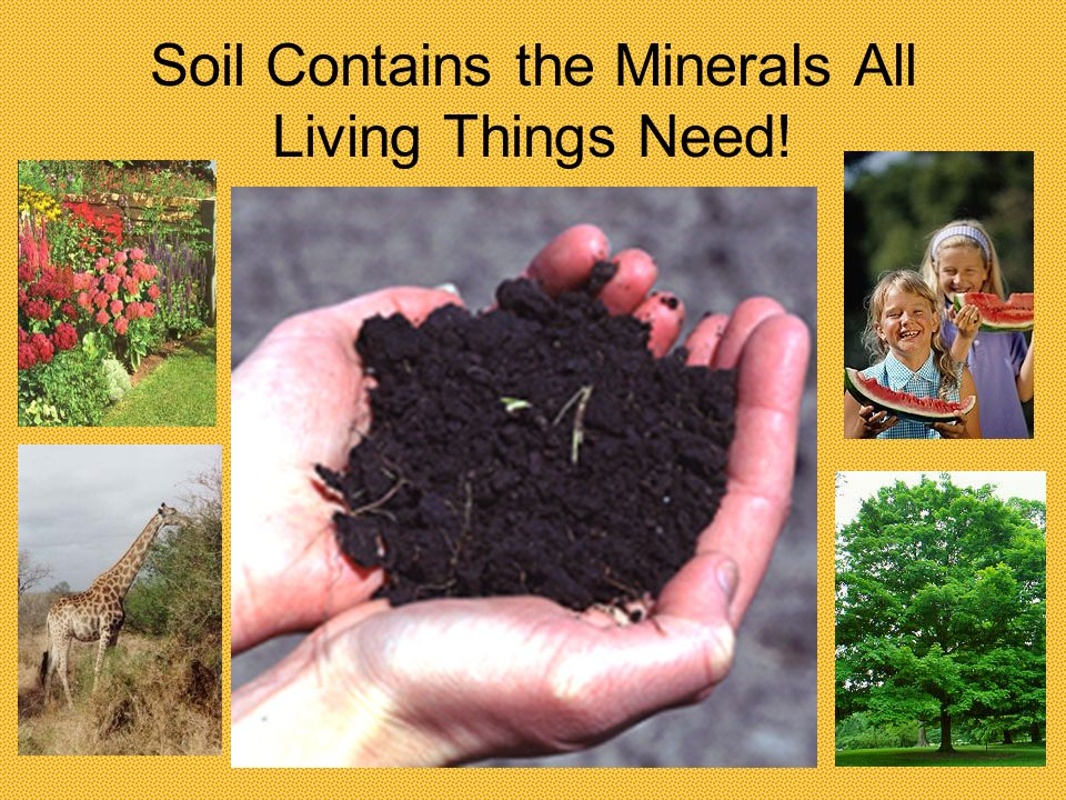 Do We Really Need Soil? Lets Dig Up the Facts!