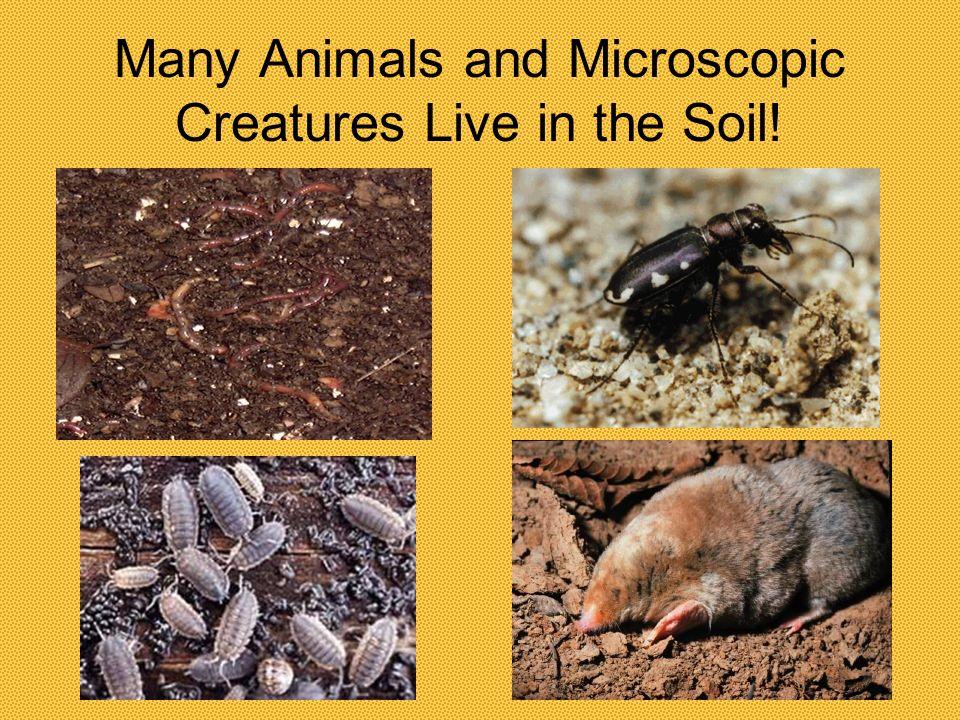 We Use Soil to Grow Food!