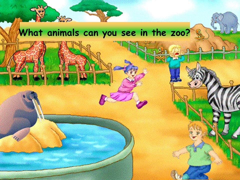Lets go to the zoo.