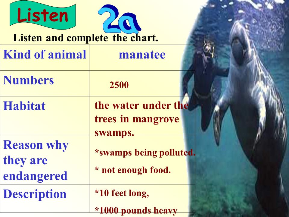 Kind of animalmanatee Numbers Habitat Reason why they are endangered Description Listen Listen and complete the chart.
