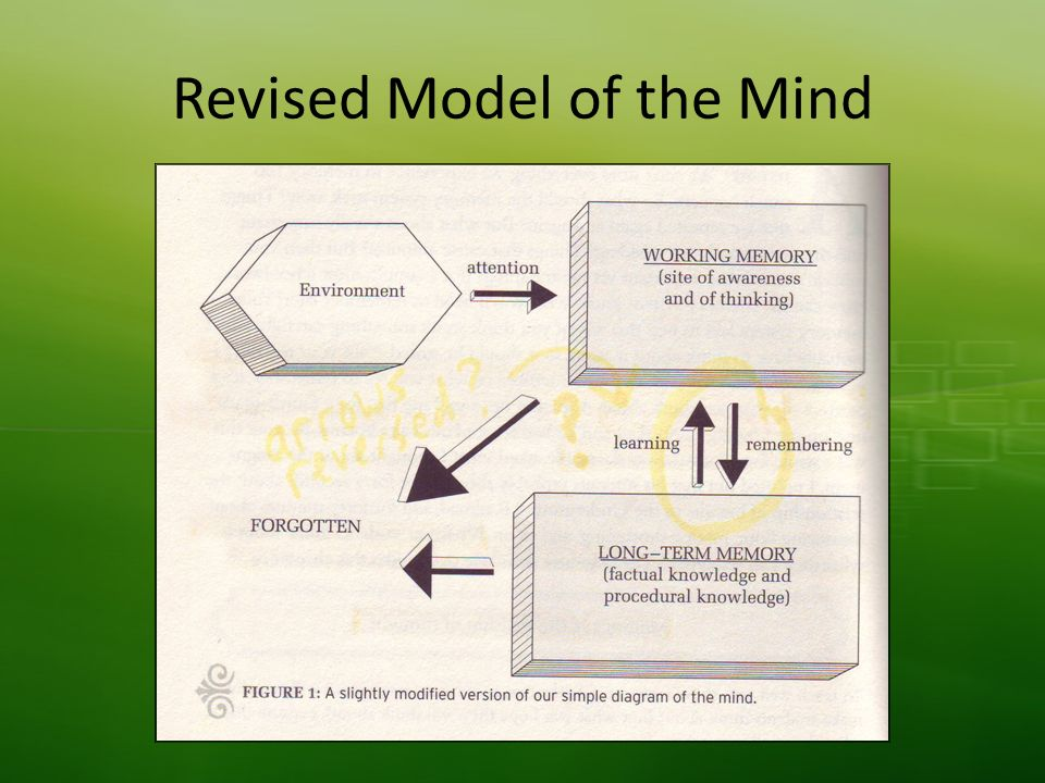 Revised Model of the Mind