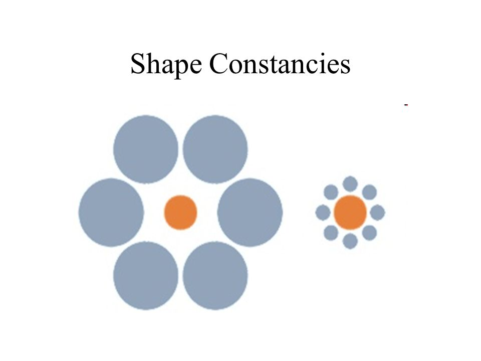 Shape Constancies