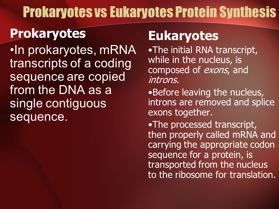 Prokaryotes vs Eukaryotes Protein Synthesis Prokaryotes In prokaryotes, mRNA transcripts of a coding sequence are copied from the DNA as a single cont