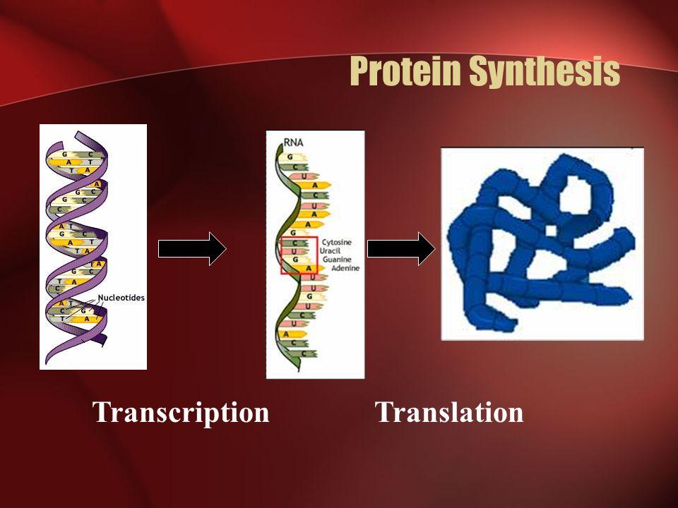 Who am I.Messenger RNA a.k.a.