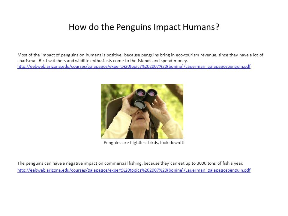 How do the Penguins Impact Humans? Most of the impact of penguins on humans is positive, because penguins bring in eco-tourism revenue, since they hav