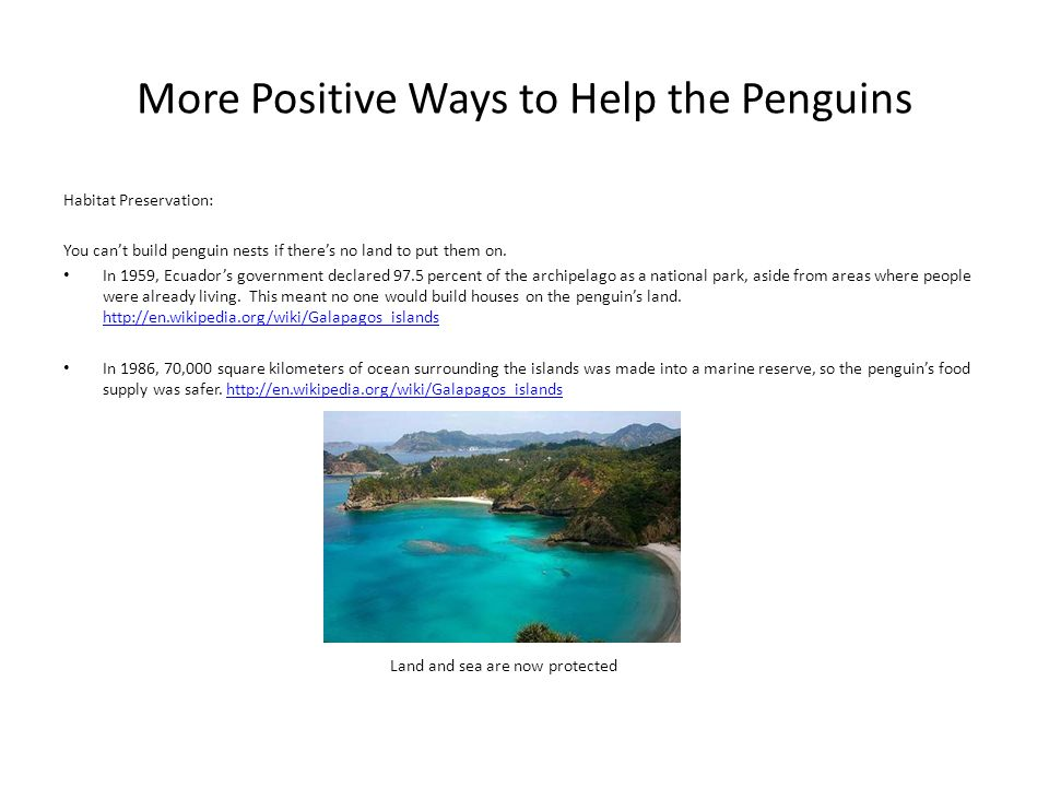 More Positive Ways to Help the Penguins Habitat Preservation: You cant build penguin nests if theres no land to put them on. In 1959, Ecuadors governm