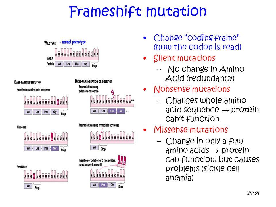 24-34 Frameshift mutation Change coding frame (how the codon is read) Silent mutations – No change in Amino Acid (redundancy) Nonsense mutations –Chan