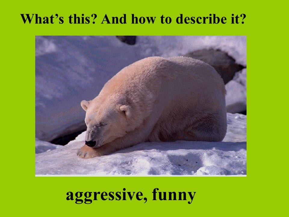 aggressive, funny