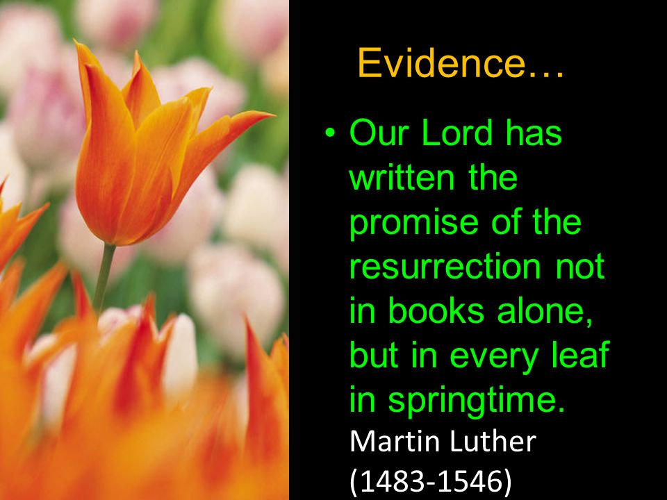 Evidence… Our Lord has written the promise of the resurrection not in books alone, but in every leaf in springtime. Martin Luther (1483-1546)