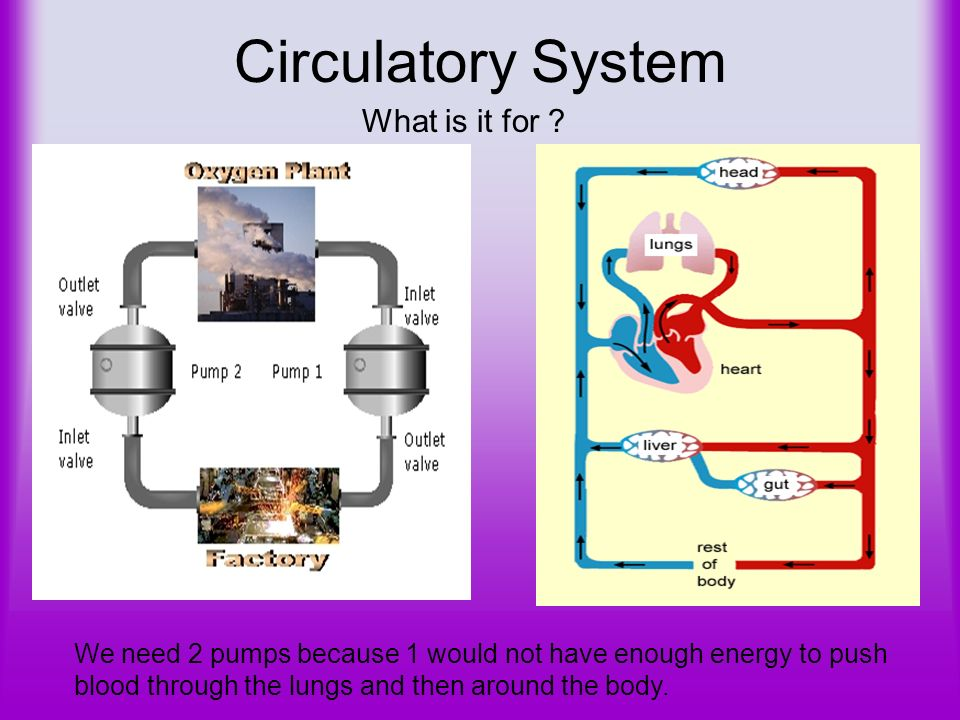 ENERGY Turning food into energy C 6 H 12 O 6 + 6O 2 6CO 2 + 6H 2 O + Respiration is the conversion of glucose into energy Glucose is burnt with oxygen