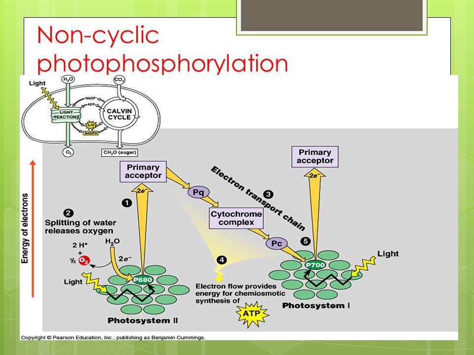 Non-cyclic photophosphorylation